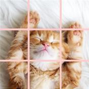 Super Cute Puzzle indir